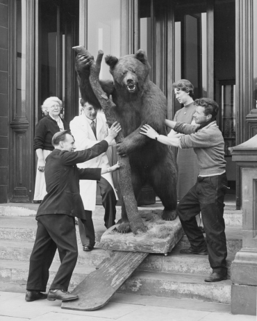 Russian Brown Bear 1957