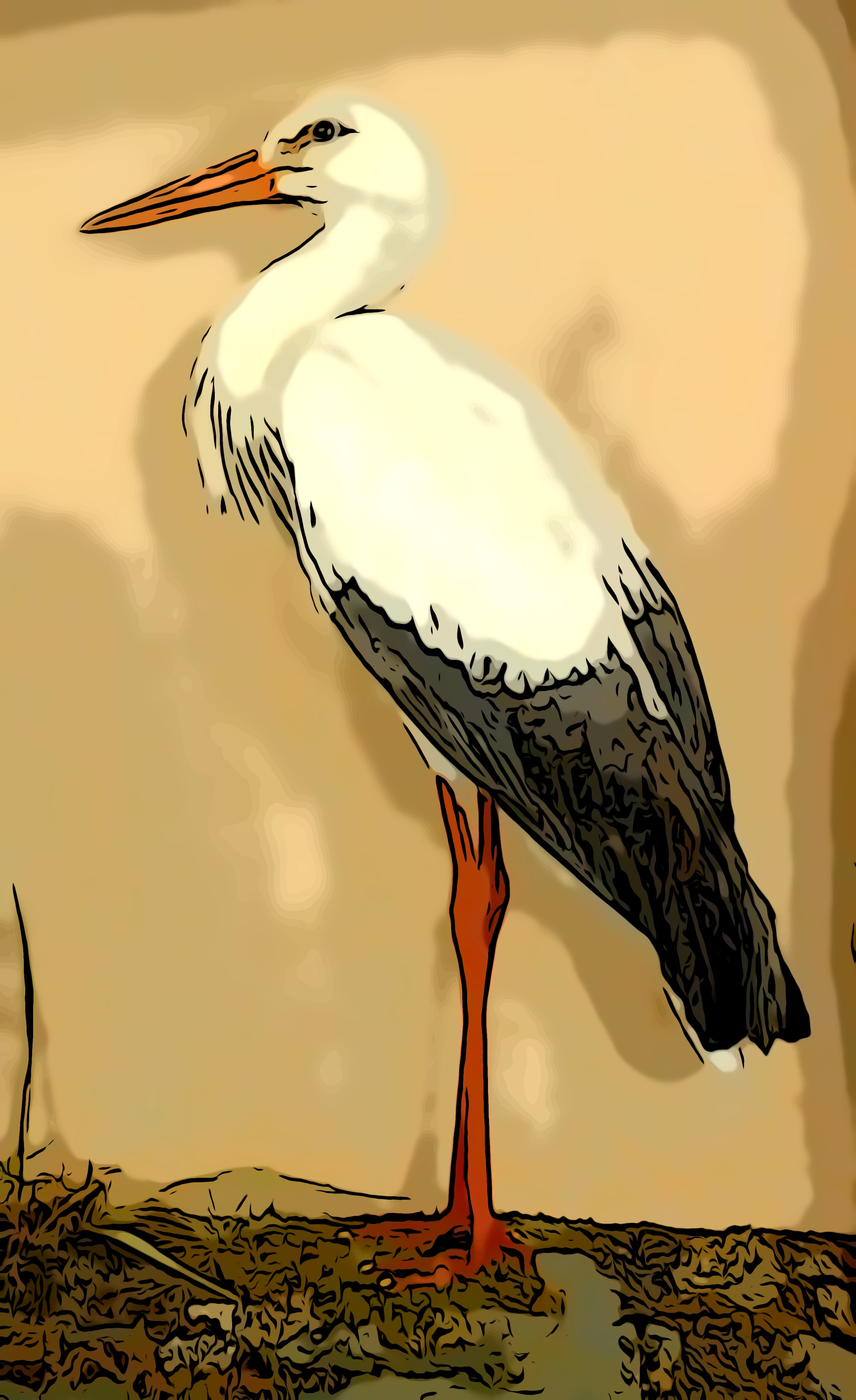 Image of a Stork from the Nelson collection